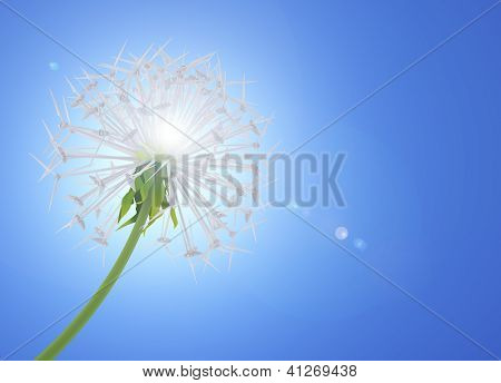 Energy Saving Dandelion