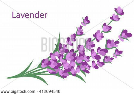 Lavender Bouquet Isolated On A White Background With The Inscription Lavender. Vector Illustration.