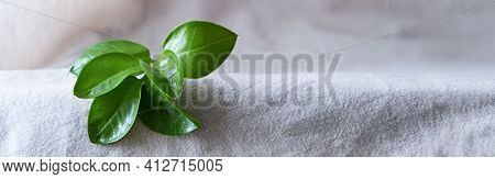 Banner, Natural Background For Eco Products.  Linen, Green Plant, Podium