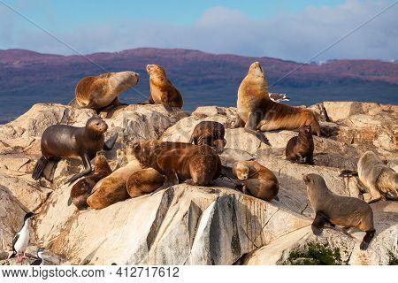 Bird Island In The Beagle Channel Near The Ushuaia City. Ushuaia Is The Capital Of Tierra Del Fuego