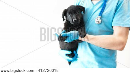Adorable Cute Black Puppy Sitting At Hands Vet In Hospital With Doctors Looking At Camera. Veteriner
