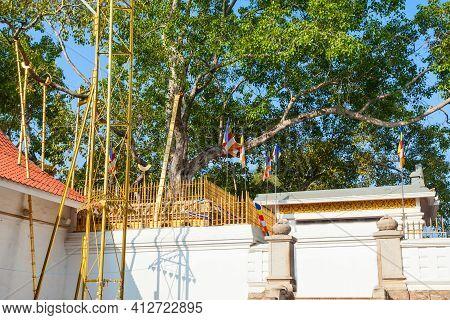 Unidentified Pilgrims At The Jaya Sri Maha Bodhi. Its A Sacred Fig Tree In Anuradhapura, Sri Lanka.