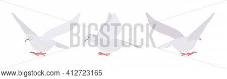 White Pigeons, Doves Set, Domestic Or Street Bird In Flight. Wildlife Study, Ornithology And Birdwat
