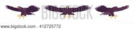 Black Eagle Set, Large Powerful Bird, Massive Wings In Flight. Wildlife Study, Ornithology And Birdw