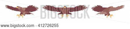 Steppe Eagle Set, Large Powerful Bird, Massive Wings In Flight. Wildlife Study, Ornithology And Bird