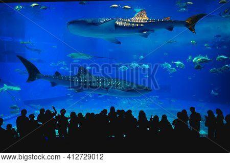 May 28, 2017: The Main Tank, Called The Kuroshio Sea, Of Okinawa Churaumi Aquarium In The Ocean Expo