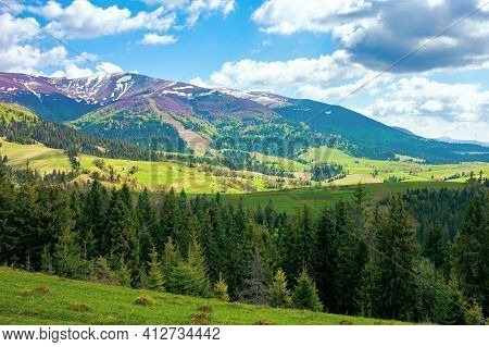 Mountain Landscape On A Sunny Day. Beautiful Alpine Countryside Scenery With Spruce Trees. Grassy Me