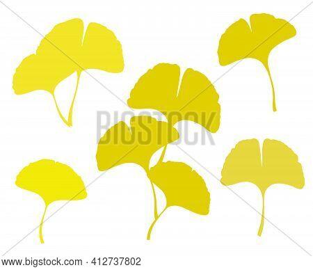 Fall Ginkgo Or Gingko Biloba Leaves Set. Nature Botanical Vector Illustration, Herbal Medicine Graph