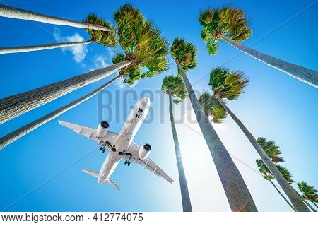 Commercial Airplane Arrives Over High Palm Trees