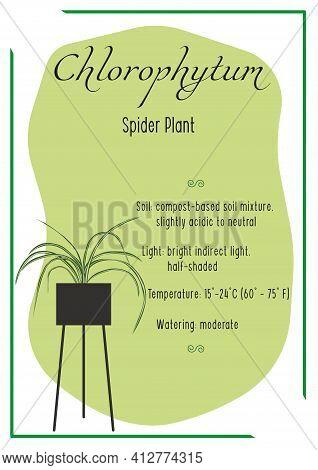 Chlorophytum. Spider Plant. Indoor Plant, Potted Plant. Care Info Card, Banner. House Plant Care. Ho
