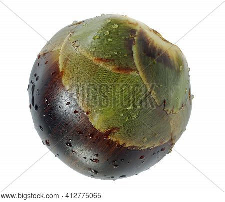 Palmyra Palm, Toddy Palm Or Sugar Palm Fruit Isolated On White Background