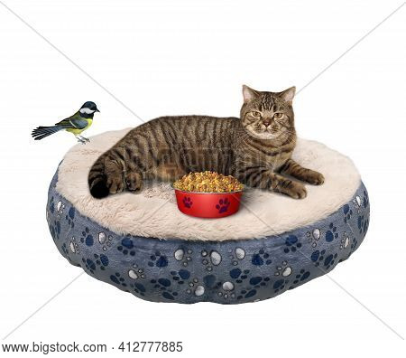 A Beige Cat Is Lying On A Pet Round Lounger Near A Bowl Of Dry Food. White Background. Isolated.