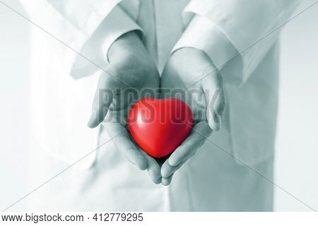 Close-up . Doctor Carefully Holds The Little Red Heart .