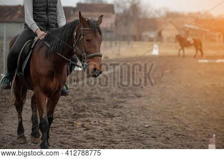 Beautiful Young Girl Riding A Brown Horse. Horse Riding.