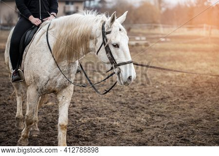 Young Girl Riding A White Horse. Horse Riding.