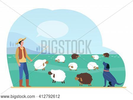 Shepherd Man With Stick And Dog Grazing Sheep On Summer Field. Lambs Animals On Pasture Flat Vector