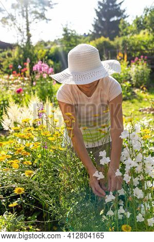 Female Gardener In A White Hat With A Wide Brim Taking Care Of Flowers In A Beautiful Summer Garden,
