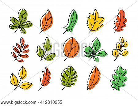 Vector Leaves Set. Botanical Doodle Drawing Illustration. Hand Drawn Sketch. Color Exotic Monstera L
