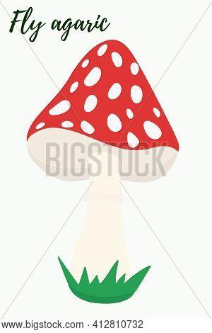 Amanita, Illustration. Vector, Red Poisonous Mushroom Fly Agaric