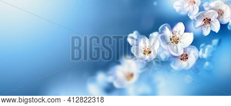 Blossom Tree Over Nature Background. Spring Flowers. Spring Background.