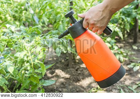 A Woman Is Spraying Of Pesticide On Potato Plantation With Hand Spray In Summer. A Female Is Sprayin