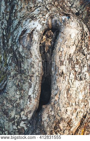 Hole In The Bark Of A Tree. Close Up. Tree Trunk With Hollow. Tree Bark Texture Background. Hollow I