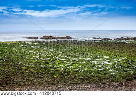 Green algae covered boulders at sea coast beach