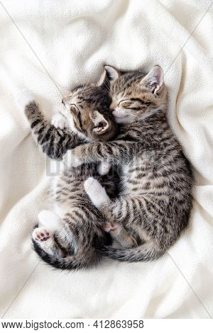 Two Small Striped Domestic Kittens Sleeping Hugging Each Other At Home Lying On Bed White Blanket Fu