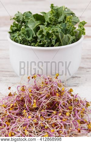 Nutritious Sprouted Kale Seeds. Concept Of Healthy Lifestyle And Nutrition