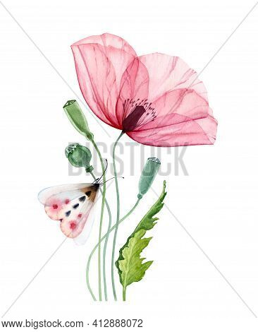 Watercolor Poppy Flower With Moth. Big Transparent Pink Flower With Colorful Butterfly. Hand Painted
