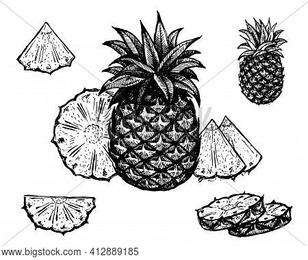 Pineapple, Vector Illustration. Vintage Graphics And Handwork. Drawing With An Ink Pen And Pencil. T
