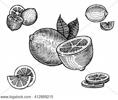 Lemon, Vector Illustration. Vintage Graphics And Handwork. Drawing With An Ink Pen And Pencil. The L