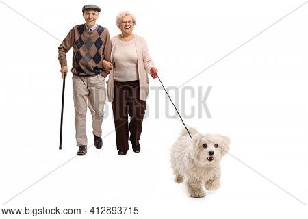 Elderly couple walking a maltese poodle dog on a lead isolated on white background