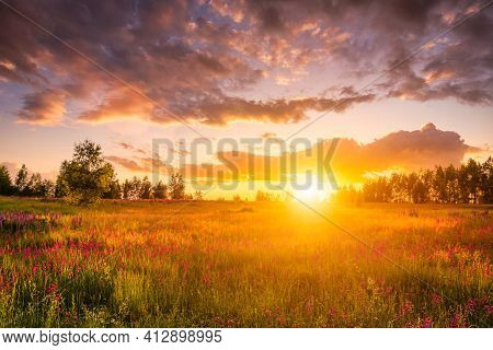 Sunset Or Sunrise On A Hill With Purple Wild Carnations, Young Birches And Cloudy Sky.