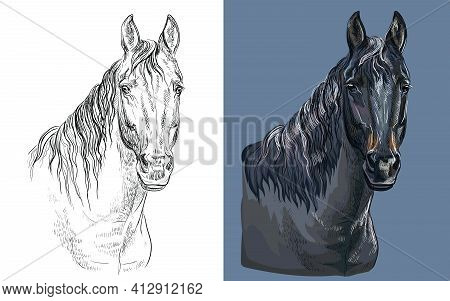 Realistic Head Of Brown Bay Horse. Vector Black And White And Colorful Isolated Illustration Of Hors