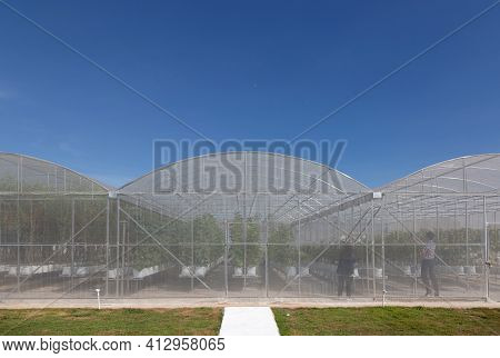Close Farming Control Environtment With Greenhouse Building To Protect Bug And Making Clean Food Pro