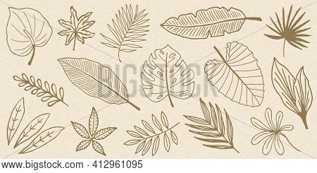 Tropical Leaves Set. Palm, Fan Palm, Monstera, Banana Leaves In Line Style. Sketches Of Tropical Lea