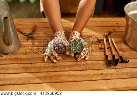 Female Hand Holding Plants On Table In Large Home Garden. Rake A Shovel And A Hoe Lying On The Table