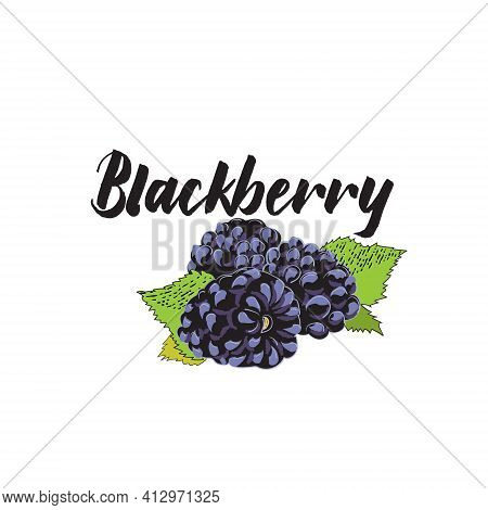 Vector Simple Isolated Image Of A Blackberry. Sketch Of An Illustration Of A Fresh Berry With A Cont