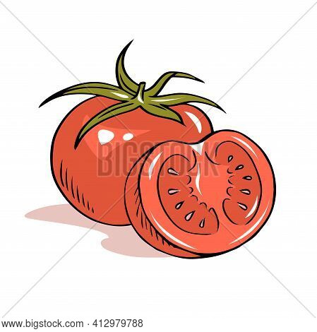 Hand Drawn Outline Illustration Of Red Appetizing Tomato Vegetables On White Background. Healthy Eat