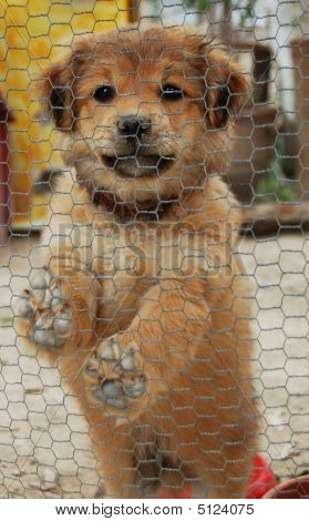 Little Dog In A Cage