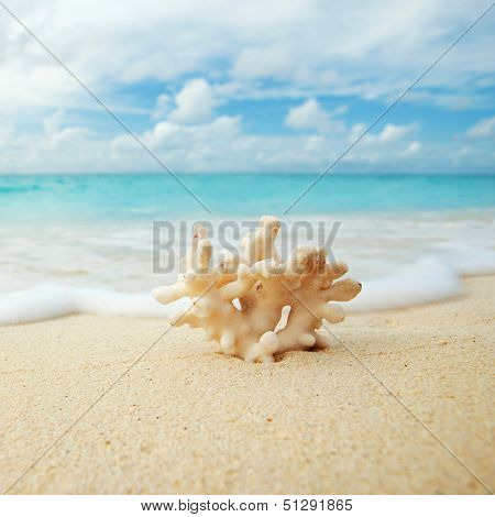 Coral on the beach