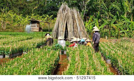 Farmer working on farmland