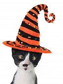 Cross eyed kitten wearing a Halloween witch hat.