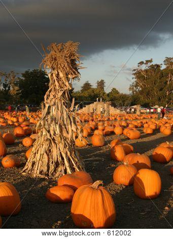 Pumpkin Farm Before The Storm