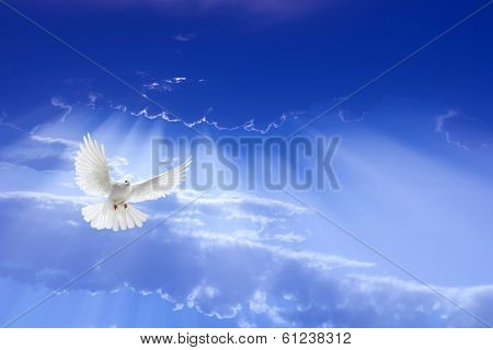 White Dove Flying In The Sky