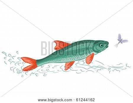 Fish and ephemera vector illustration without gradients poster