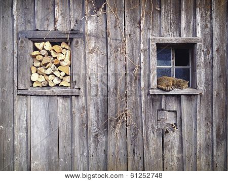 Snoozing cat in a window frame of a very old shed. In the other window frame there is some stacked firewood. poster