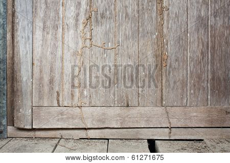 Old Wood Door with Termite
