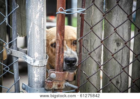 Neglected dog behind fence poster
